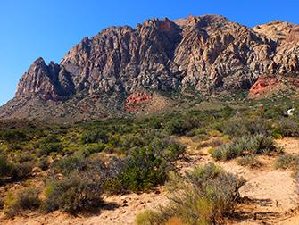 Balade à cheval dans le Red Rock Canyon - faune et flore