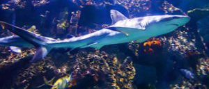 Shark Reef aquarium à Las Vegas