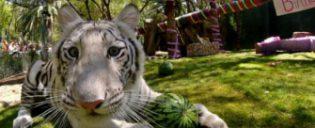 Siegfried & Roy's Secret Garden et Dolphin Habitat à Las Vegas
